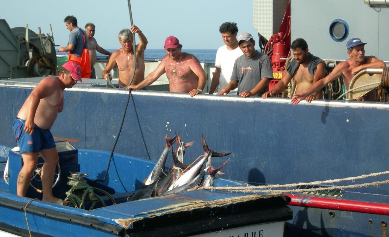 Cristina Lelli, La pesca, Isole Eolie (ME)