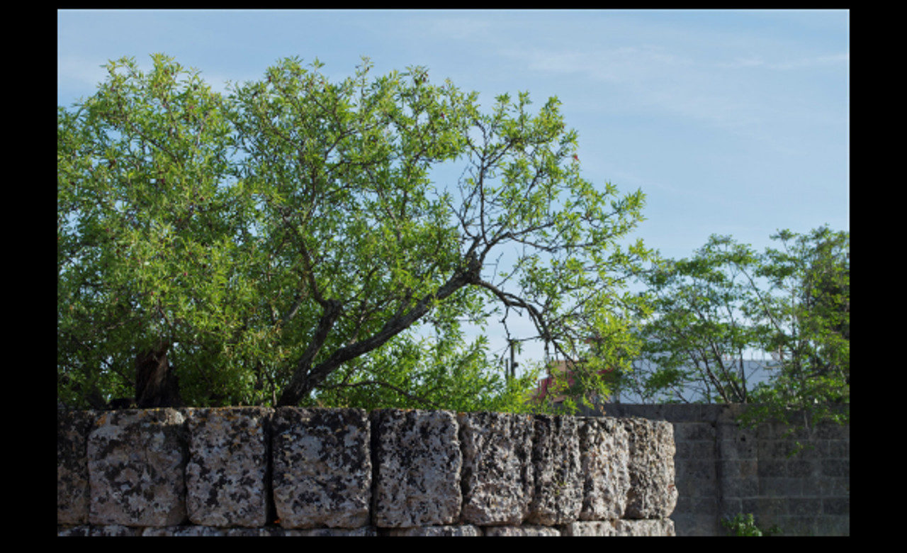 Fonte pliniano, parco archeologico delle mura messapiche, maggio 2015, Manduria (TA), Serena Leone