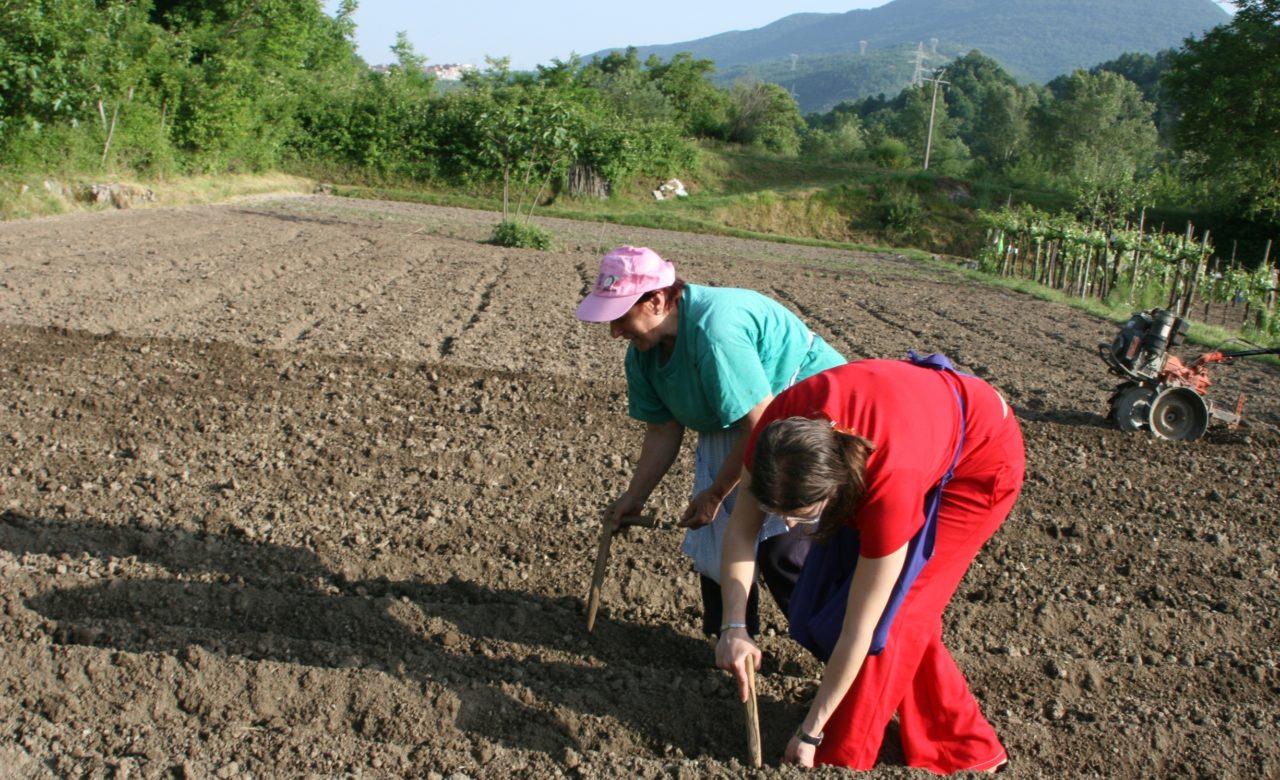 Michele D'Alessio, Lavori in agricoltura, Vallo di diano (SA)
