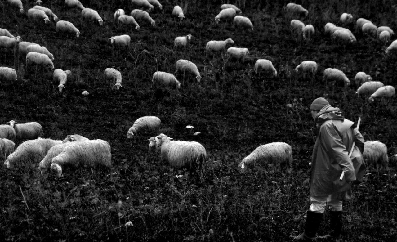 Renata Messina, Canto notturno, campagna della provincia di Trapani