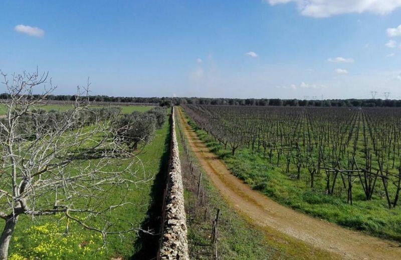 Il progetto X Farm trasformerà un'azienda agricola di 50 ettari confiscata alla mafia a San Vito dei Normanni (BR)
